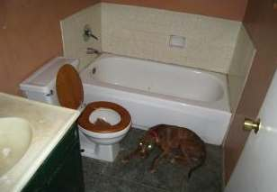 Photo from Paul that showed a dog was living in a bathroom