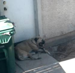 Roxy laying on her concrete bed